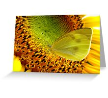 Nectar Paradise Greeting Card