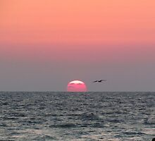 Seagull sunset by stlmoon