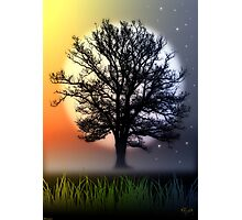 THE OAK TREE Photographic Print