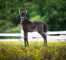 Miniature Horse Calendar by amieanderson