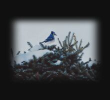 Bluebird & Fir Tree by Elaine  Manley