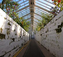 Victorian Glasshouse by Mibby