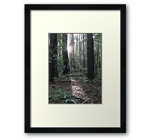 redwood dawn Framed Print