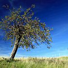 apple tree by srphotos