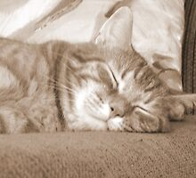 Garfield Sleeping Happily by Lori McCreery