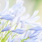 Sweetheart; flowers by Kornrawiee