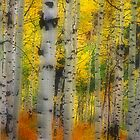 Aspen Dreams by Steve  Taylor