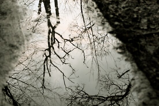 Reflection in a puddle by Andrew Dunwoody