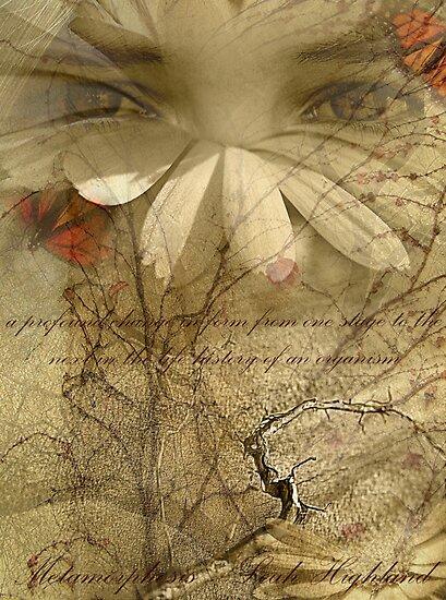 Metamorphosis by Leah Highland