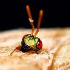 A Cuckoo wasp emerging by wildrider58