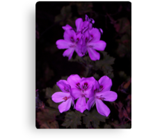 Purple Palagonia Canvas Print