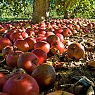 Apple Harvest by BigRPhoto