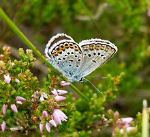 Not blue, but butterfly blue :) by Marko Palm
