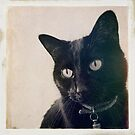 Vintage black cat by Louise LeGresley