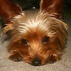 Lonley Pup by CarlaD