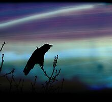 Crow's Dream by Tanya B. Schroeder