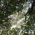 Just Look Up!  by John  Kapusta
