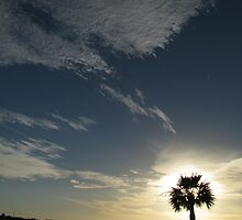 enlightened palm by paulscar