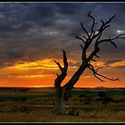 Lone Tree. by trevorb
