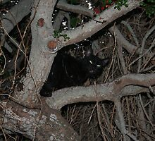 Black cat by markwalton3