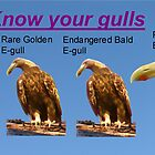 Know your gulls by MooseMan