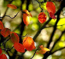 Fall Leaves by Vasile Stan