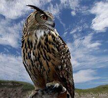 Mr. Owl by chardy