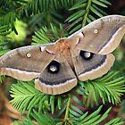 Mothra by Vincent Vartorella