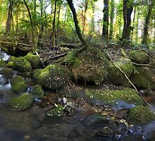 Cement Creek 180 Pano by Mark Jones