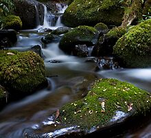 Cement Creek by Mark Jones