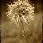 Sepia Dreams by Martie Venter
