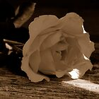 Sepia Rose by danaatlee