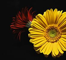 Yellow and Red by jerry  alcantara