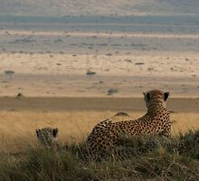 Surveying The Plains by Steve Bulford