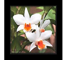 Painted Orchids Photographic Print