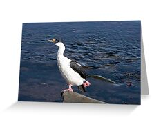 ......do the Hokey Pokey......  ~  Antarctic Cormorant Greeting Card