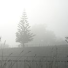 Waikato Fog by avionz