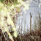 Reflection in the Weeds by Absurd  Digital Imagery