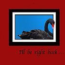 Swan Leaving the Frame Greeting Card by Delores Knowles