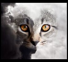 Kitten in a Cloud by Danielle Espin