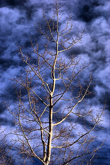 Quaking Aspen by Charles Dobbs Photography