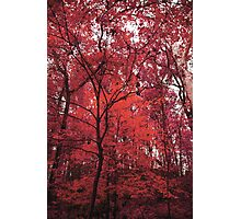 Pink Forest Photographic Print