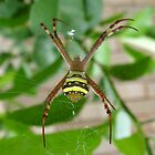 incey wincey by Fiona Moran
