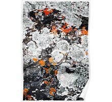 Orange and Grey Lichen #1 Poster