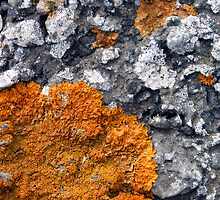 Orange and Grey Lichen #2 by Syman  Kaye