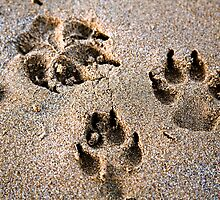 Paw Prints In the Sand by Astrid Pardew