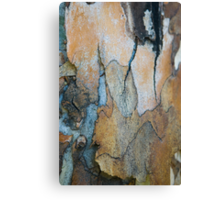 Blue Gum #1 Canvas Print