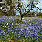 Bluebonnet Field by Joe Hewitt