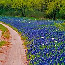 Bluebonnet Road by Joe Hewitt