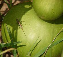 Grasshopper on Gourd by inventor